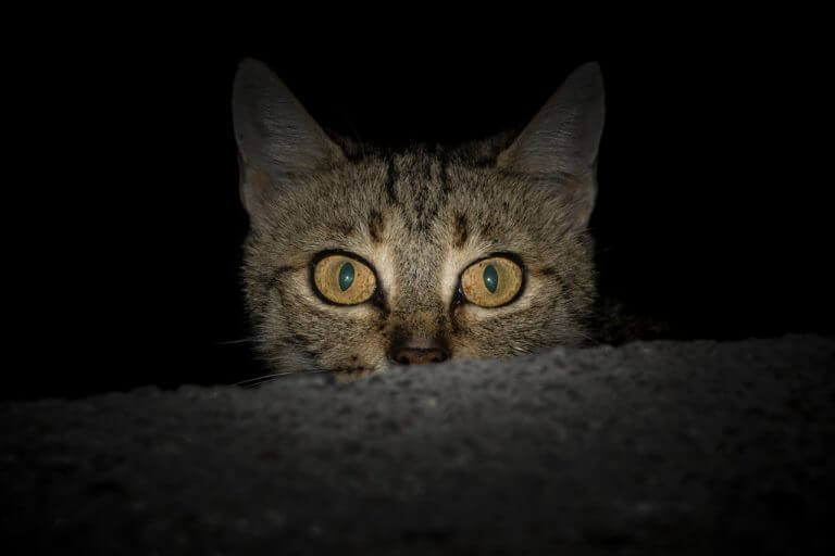 Loomade elu öösel