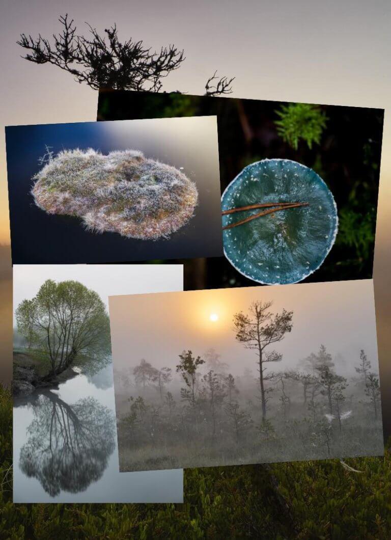 Neli korda neli loodusfotot